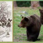 El nombre del osito de peluche o Teddy Bear