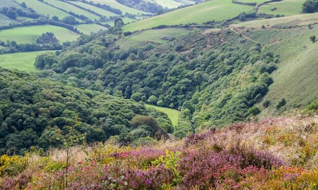 Tesoro al noreste de Somerset en Inglaterra
