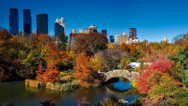 Central park virtualmente